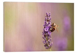 Wood print  Lavender in summer - Nailia Schwarz