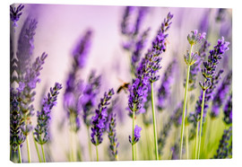 Canvas print  Lavender in Summer - Nailia Schwarz