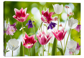 Canvas print  Tulips and columbine flowers