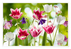 Premium poster  Tulips and columbine flowers