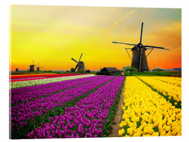 Acrylic print  Dutch windmills and fields of tulips