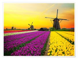 Poster  Dutch windmills and fields of tulips