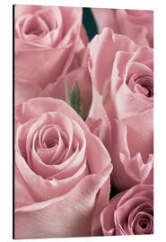Aluminium print  Bunch of pale pink roses