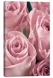 Canvas  Bunch of roses in pale pink