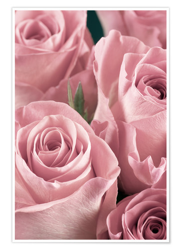 Premium poster Bunch of pale pink roses