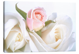 Canvas print  Roses on a white background