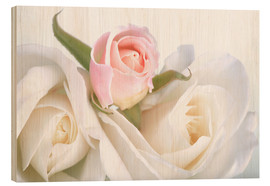 Wood print  Roses on a white background