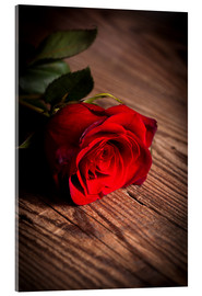 Acrylic print  Red Rose on Wood