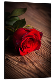 Aluminium print  Red rose on wood