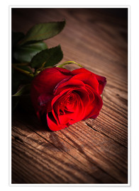 Premium poster  Red rose on wood