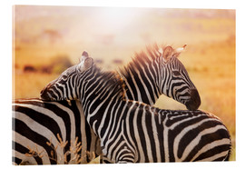 Acrylic glass  Zebra with its foal, Kenya