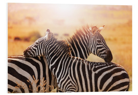 Foam board print  Zebra with its foal, Kenya