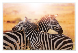 Poster  Zebra with its foal, Kenya