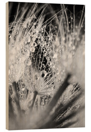 Wood print  Dandelion with water drops