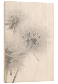 Wood  Fluffy dandelions on white background
