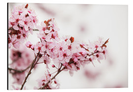 Alu-Dibond  Cherry blossoms