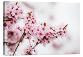 Canvas print  Cherry blossoms