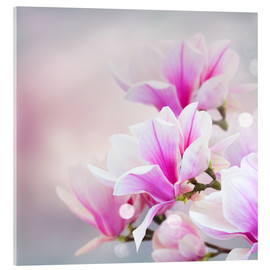 Acrylic print  Magnolia flowers on bokeh background