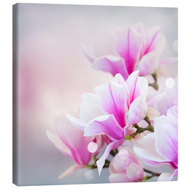 Magnolia flowers on bokeh background