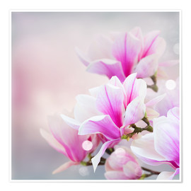 Premium poster  Magnolia flowers on bokeh background