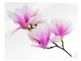 Acrylic print  Branch of pink magnolia