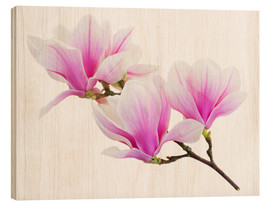 Wood print  Branch of pink magnolia