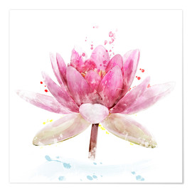 Premium poster  Pink Waterlily Flower