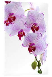 Acrylic glass  Orchid branch