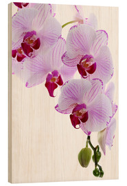 Wood print  Orchid branch