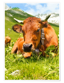 Premium poster  Cow with bell on Mountain Pasture