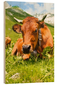 Wood print  Cow with bell on Mountain Pasture