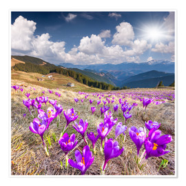 Premium poster Crocuses in a mountain landscape