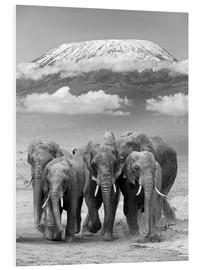 Foam board print  Elephant herd at Kilimanjaro
