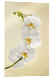 Acrylic glass  White orchid