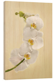 Wood print  White orchid