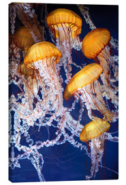 Canvas print  Yellow jellyfish in the ocean