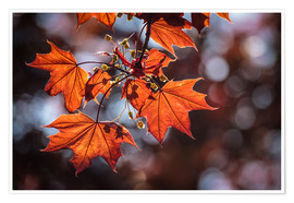 Premium poster Autumn Colors