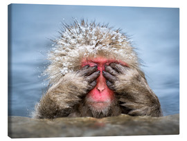 Canvas print  Japanese Macaque in a hot spring - Jan Christopher Becke