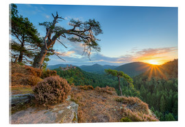 Acrylic glass  Days beginning in the Palatinate Forest - Michael Valjak