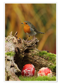 Premium poster  Robin in the fairy forest - Uwe Fuchs