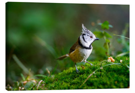 Canvas print  Cute tit standing on the forest ground - Peter Wey