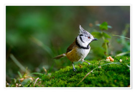 Premium poster Cute tit standing on the forest ground