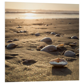 Foam board print  sun shells - Thomas Klinder