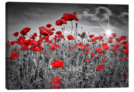 Canvas print  Idyllic field of poppies - Melanie Viola