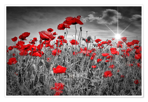 Premium poster Idyllic field of poppies