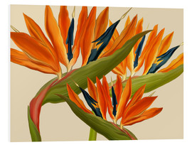 Foam board print  Bird of Paradise - MiaMia