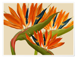 Premium poster  Bird of Paradise - Mandy Reinmuth