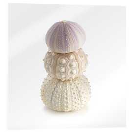 Acrylic print  Sea urchin shells on top of each other