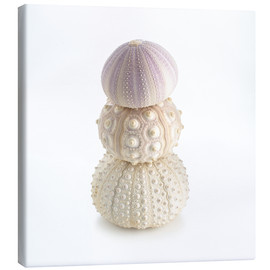 Canvas  Sea urchin shells on top of each other
