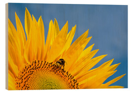Wood  Sunflower against blue sky - Edith Albuschat